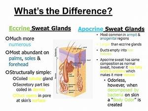 Why Does Sweat Smell Bad