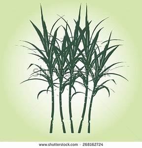 Sugarcane Stock Photos, Royalty-Free Images & Vectors ...