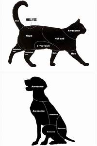 Cats Vs Dogs Petting Diagram This Is So Accurate I Love It
