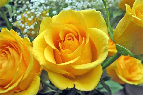 yellow flower mishmash   called life