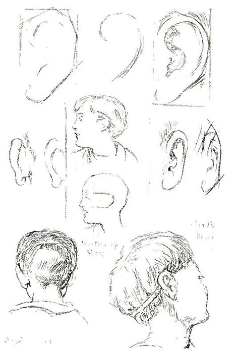 draw heads faces hair  facial features
