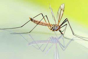 Was Essen Mücken : was ist gesunde ern hrung und wie geht das wiressengesund ~ Frokenaadalensverden.com Haus und Dekorationen