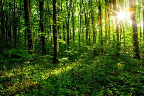 tropischer regenwald landschaft amazon stockfoto