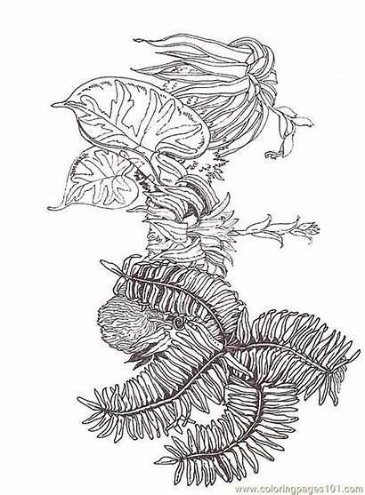 Coloring Fern Branch Pages Printable Flowers Reverse