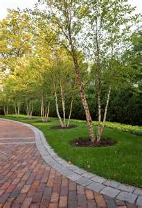 Best Outdoor Patio Furniture Companies by Row Of Trees Along Driveway