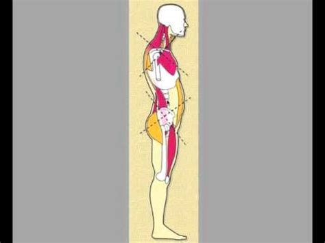 Boat Pose Weak Hip Flexors by 45 Best Homecare After Massage Images On Pinterest