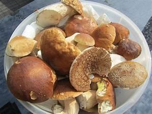 Kann Man Rhabarber Roh Essen : kann man alle pilze roh essen warum wenige ausnahmen wie champignons roh gegessen werden ~ Eleganceandgraceweddings.com Haus und Dekorationen