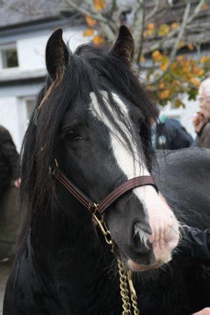 arthrose pferd behandlung therapie vorbeugung