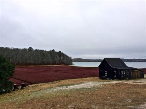 Cranberry Bog Tours In Cape Cod  New England Vacation Rentals