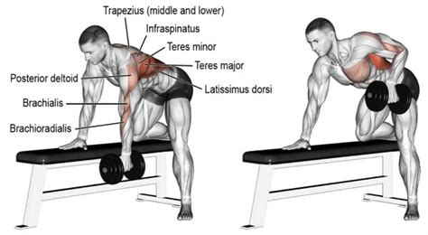 Best Bodybuilding Back Workout For Lat Width