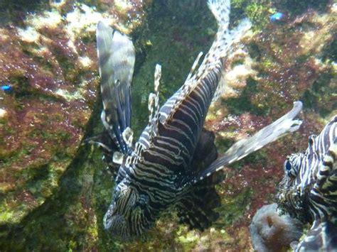aquarium de lyon ce qu il faut savoir pour votre visite tripadvisor