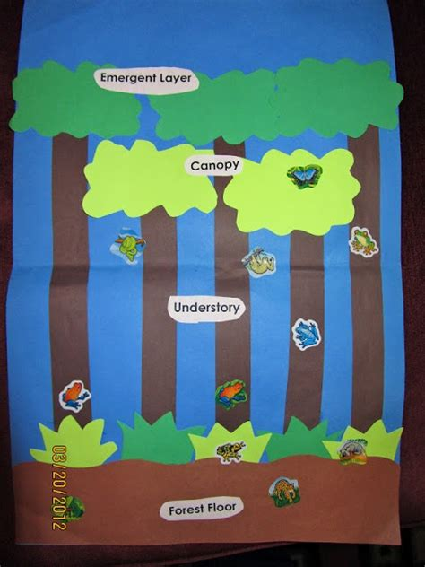 69 best rainforest unit images on activities 386 | bbf7141fa74dbf8ae402b002152b77db rainforest preschool rainforest theme