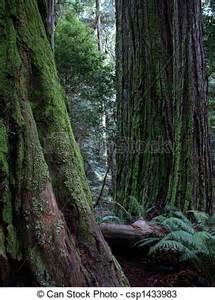 Redwood Tree Trunk Clip Art