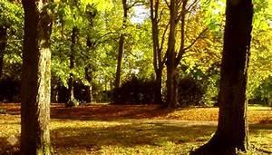 Controle Technique Petite Foret : seconde pro nature jardin paysage for t briace nantes loire atlantique ~ Medecine-chirurgie-esthetiques.com Avis de Voitures