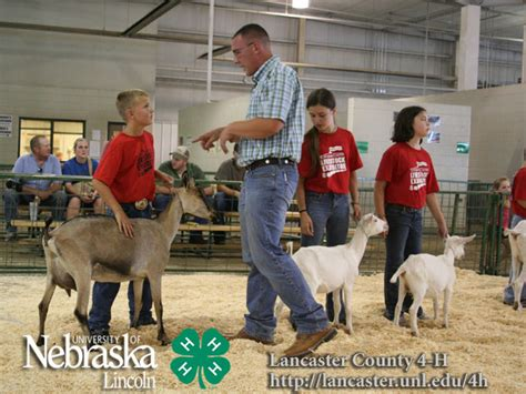 lancaster county super fair   ffa  results