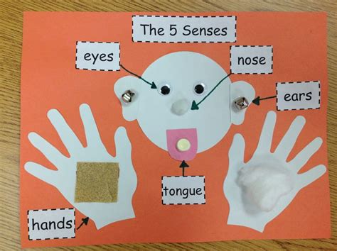 our five senses craftivity preschool science 783 | 73ec0cf016686b357053018bb9ff2dad