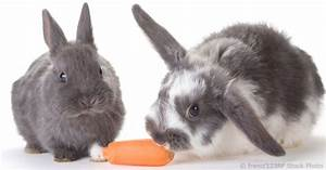 A Good Diet Chart Feeding Rabbits Vegetables And Fruits