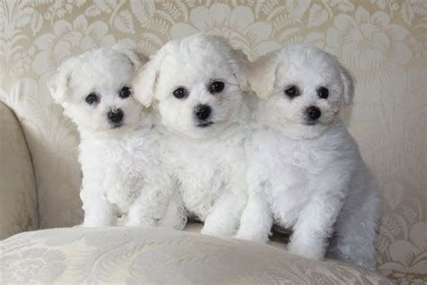 Just Do It Wallpaper 15 Cutest Puppies That Will Melt Your Heart Barking Royalty