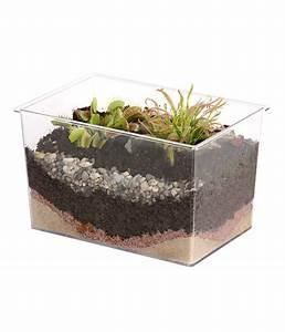 Fleischfressende Pflanzen Kaufen : fleischfressende pflanzen im aquarium dehner ~ Michelbontemps.com Haus und Dekorationen