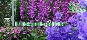 Come si chiama? Diamo un nome a fiori e piante Fiori e Foglie
