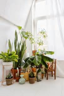 home interior plants 7 different way to indoor plants decoration ideas in living room