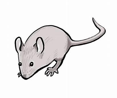 Mouse Gruffalo Commons Wikimedia