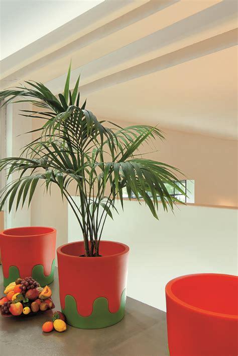 Pflanzen Im Kinderzimmer by Die Topfpflanzen Im Kinderzimmer Greenspired