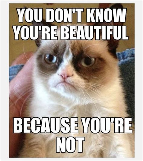Top 49 Most Funniest Grumpy Cat Quotes  Just Laughs Fun