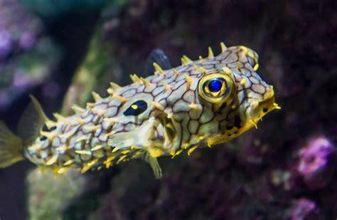 la rochelle aquarium tarif aquarium la rochelle tarif