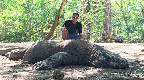 Fast Boat From Lombok To Labuan Bajo by Komodo Dragon Tours From Lombok Joshymomo Org
