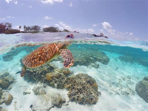 Great Barrier Reef | Region | Queensland - Australia's Guide
