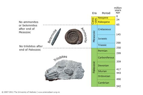 using index fossils science learning hub
