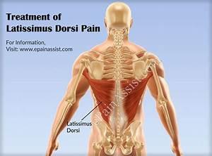 Human Muscle Latissimus Dorsi – tenderness.co