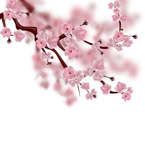 Japanese Cherry Tree A Branch Of Pink Sakura Blossom