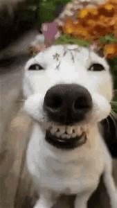 Dog Smile Gif   www.pixshark.com - Images Galleries With A ...