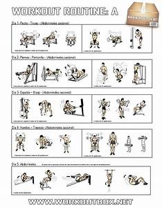 Full Gym Workout Chart