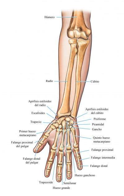 douleur scaphoide pied
