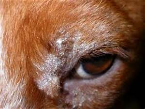 Clinica Veterinaria Estepona - 14 things you did not know ...