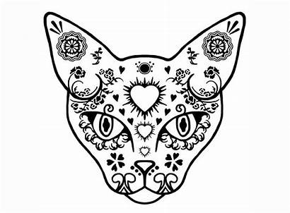 Skull Sugar Cat Glass Coloring Pages Tattoo
