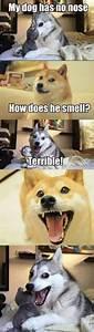husky pun meme