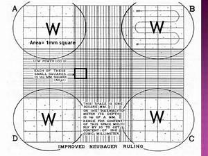 Wbc Method