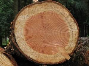 Comment Creuser Un Tronc D Arbre : coupe d 39 un tronc d 39 arbre ~ Melissatoandfro.com Idées de Décoration