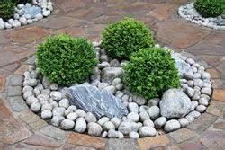 Kugelbäume Immergrün Winterhart : 5 immergr ne und winterharte kugelb ume f r den vorgarten kugelbaum garten und haus und garten ~ Watch28wear.com Haus und Dekorationen