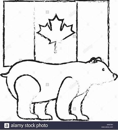 Bear Grizzly Flag Canadian Symbol Alamy