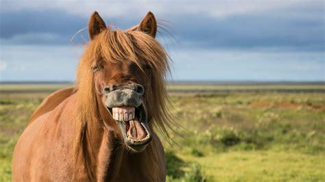 horse horses laughing smiling weirdest pic monkeys claims burglars involve insurance