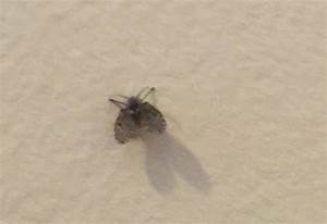 Bathroom flies archives what39s that bug for Bathroom bugs