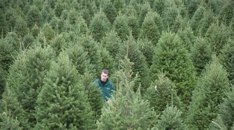 tree farms where can i buy a real tree in south jersey