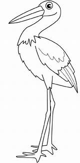 Stork Coloring Its Feathers Nozzle Legs Pages Bird Colouring Pelican Drawings sketch template