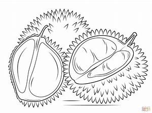 Whole and sliced durian coloring page | Free Printable ...