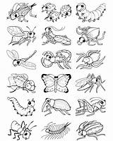 Coloring Insect Bug Stickers Colouring Insects Bugs Preschool Own Dover Welcome Publications Printable Sheets Doverpublications Adult Crafts Worksheets Draw Spring sketch template
